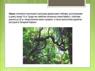 Лианы отличаются прочными и крупными древесными стеблями, достигающими в длин