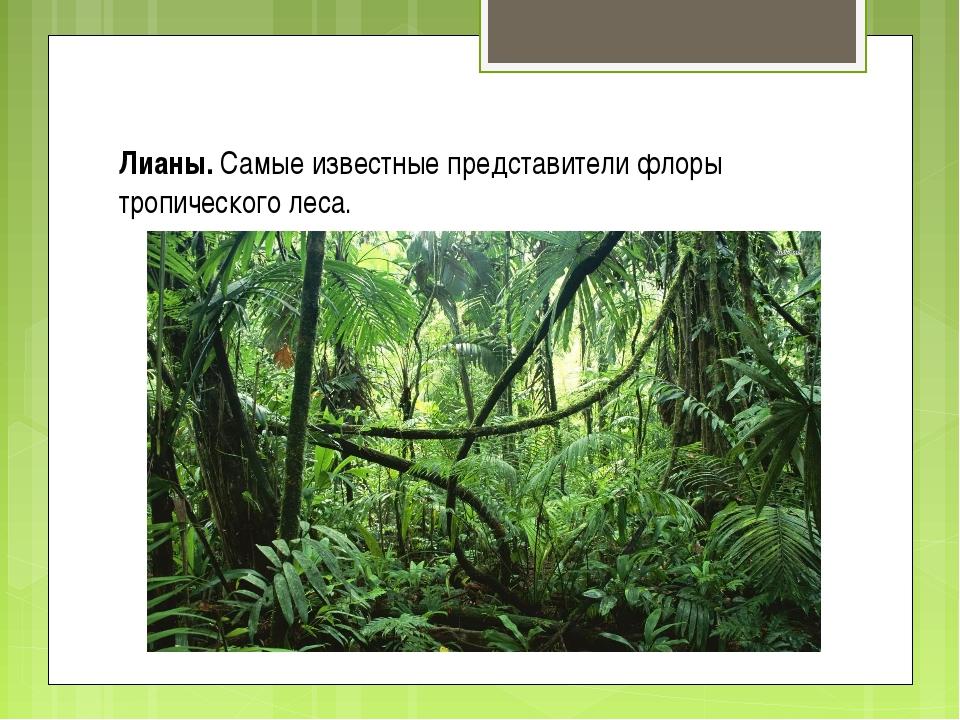 Лианы. Самые известные представители флоры тропического леса.