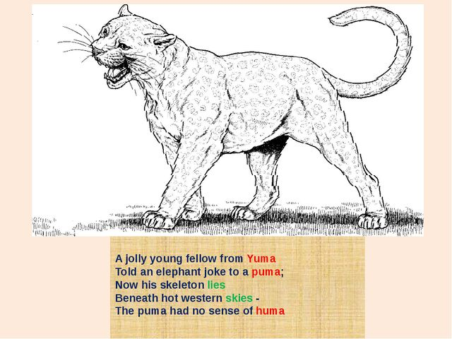A jolly young fellow from Yuma Told an elephant joke to a puma; Now his skele...