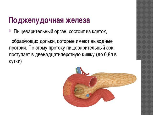 Поджелудочная железа Пищеварительный орган, состоит из клеток, образующих дол...