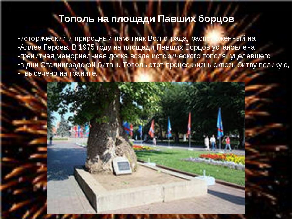 Тополь на площади Павших борцов исторический и природный памятник Волгограда,...