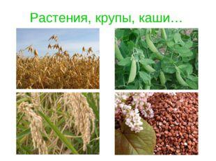 Растения, крупы, каши…