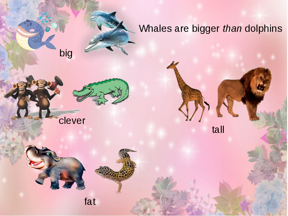 big Whales are bigger than dolphins clever tall fat