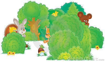 фон леса