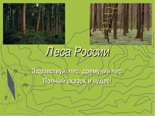 Леса России Здравствуй, лес, дремучий лес, Полный сказок и чудес!