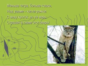 Меньше тигра, больше кошки, Над ушами – кисти-рожки. С виду кроток, но не вер