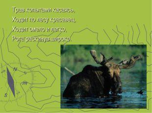 Трав копытами касаясь, Ходит по лесу красавец, Ходит смело и легко, Рога раск