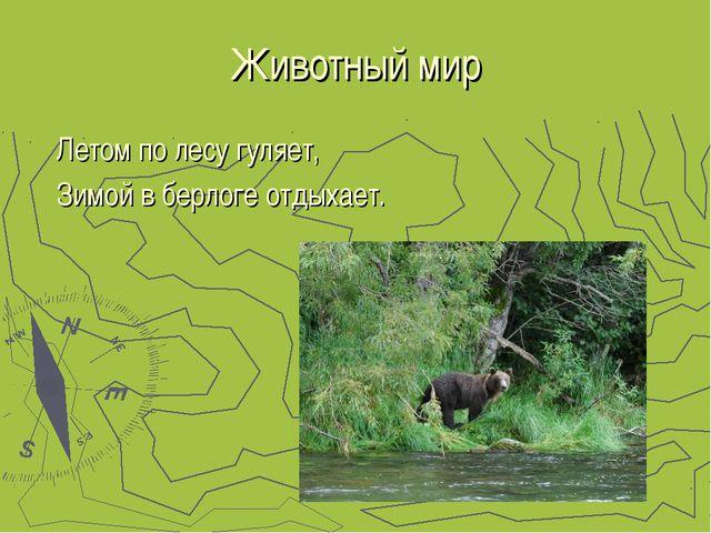 Животный мир Летом по лесу гуляет, Зимой в берлоге отдыхает.