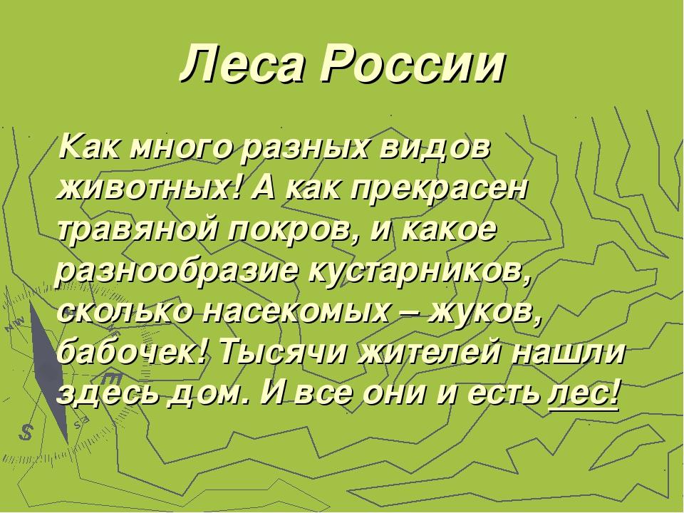 Леса России Как много разных видов животных! А как прекрасен травяной покров,...