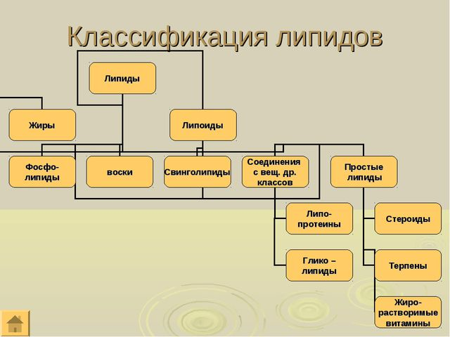 Классификация липидов