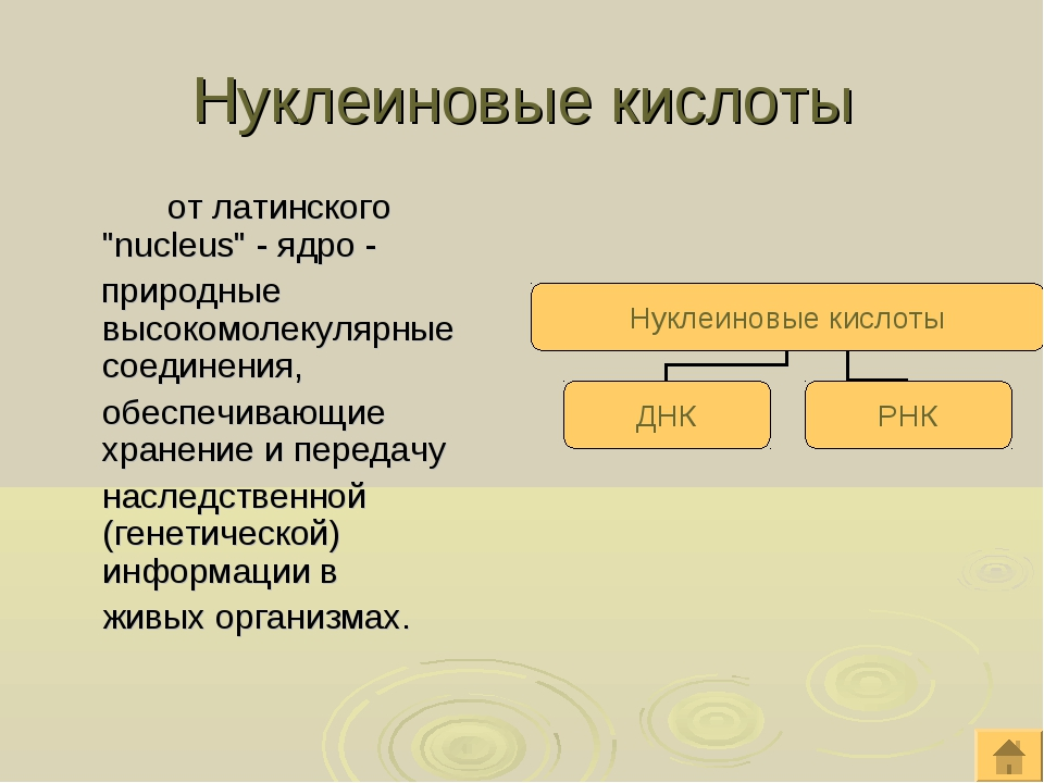 """Нуклеиновые кислоты от латинского """"nucleus"""" - ядро - природные высокомолеку..."""