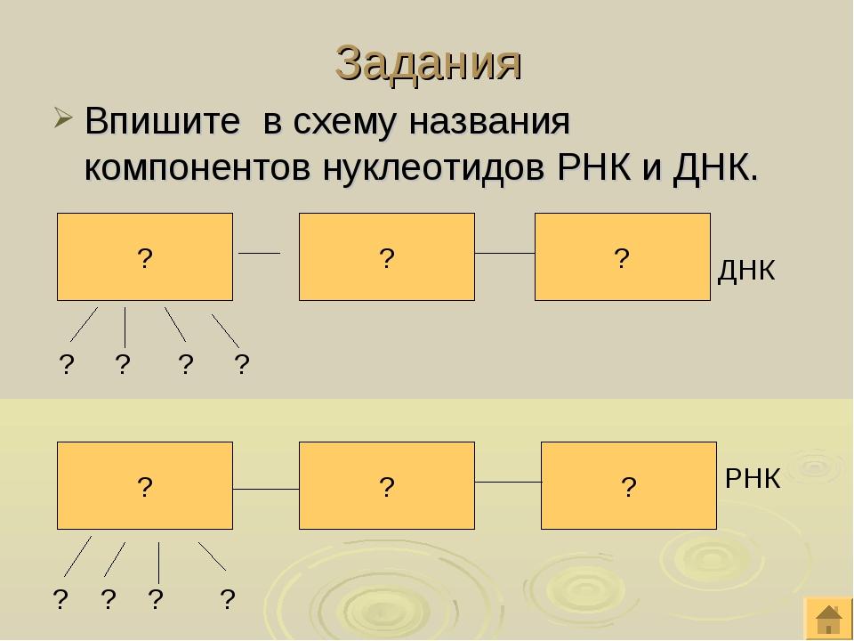 Задания Впишите в схему названия компонентов нуклеотидов РНК и ДНК. ? ? ? ? ?...