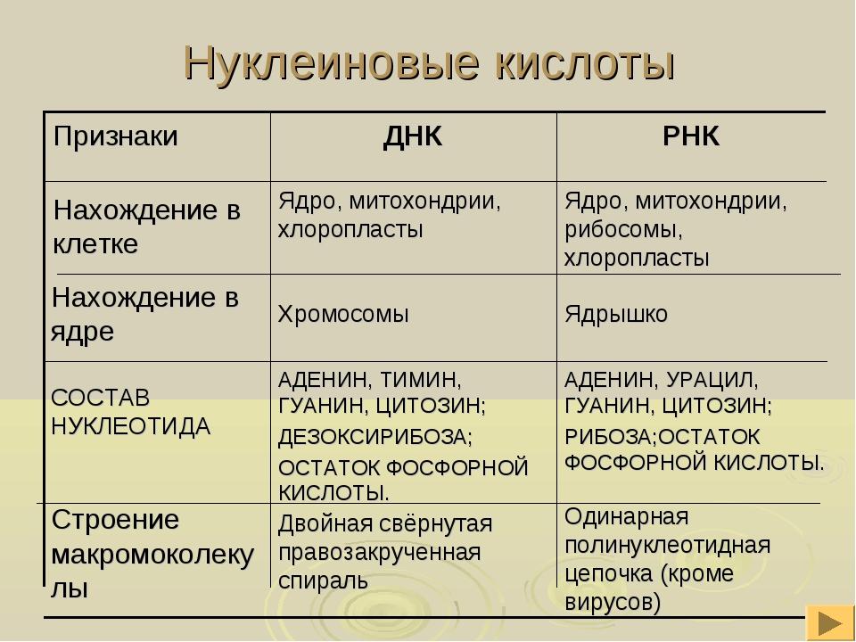 Нуклеиновые кислоты АДЕНИН, УРАЦИЛ, ГУАНИН, ЦИТОЗИН; РИБОЗА;ОСТАТОК ФОСФОРНОЙ...