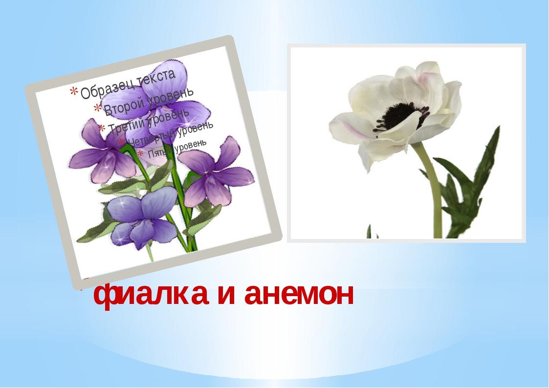 фиалка и анемон