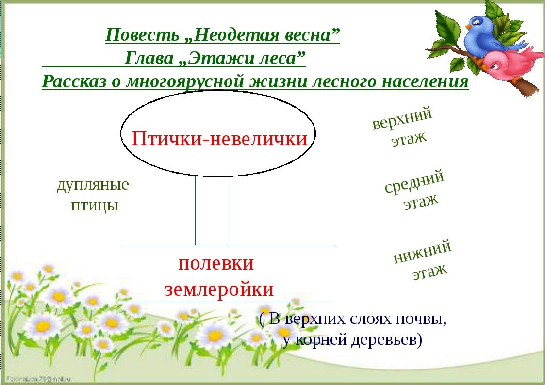 """Повесть """"Неодетая весна"""" Глава """"Этажи леса"""" Рассказ о многоярусной жизни лес..."""