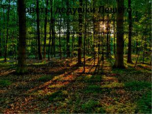 Советы дедушки Лешего: • Ветки не ломайте, деревья не качайте, ни травинку, н