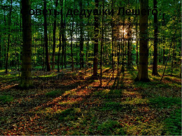Советы дедушки Лешего: • Ветки не ломайте, деревья не качайте, ни травинку, н...