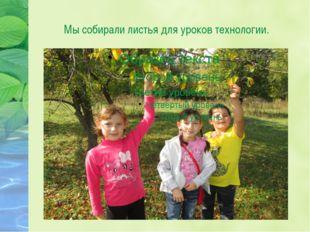 Мы собирали листья для уроков технологии.