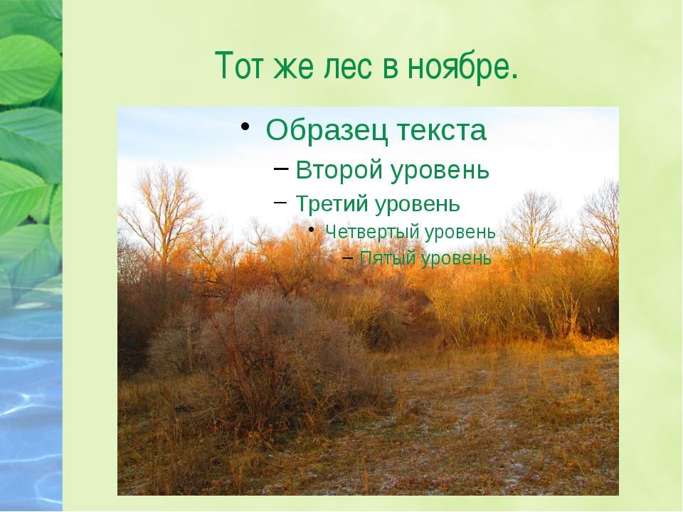 Тот же лес в ноябре.
