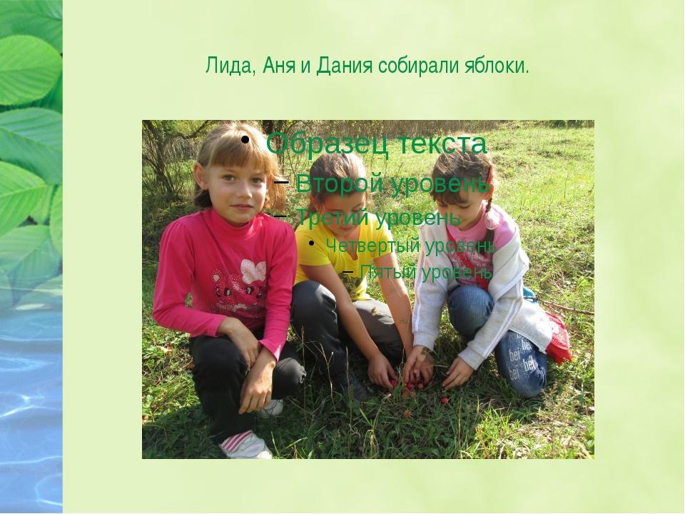 Лида, Аня и Дания собирали яблоки.