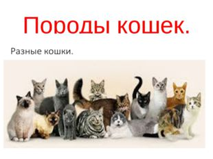 Породы кошек.