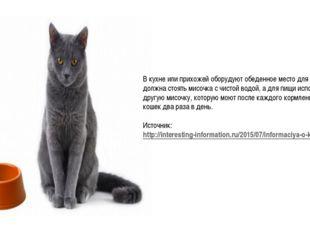 В кухне или прихожей оборудуют обеденное место для кошки. Там должна стоять м