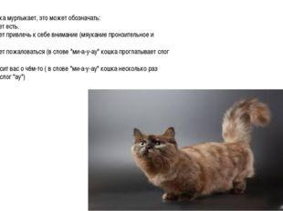 Когда кошка мурлыкает, это может обозначать: 1. Она хочет есть. 2. Она хочет