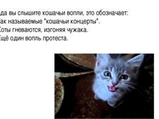 """Когда вы слышите кошачьи вопли, это обозначает: 1. Так называемые """"кошачьи ко"""
