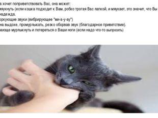 Kогда кошка хочет поприветствовать Вас, она может: 1. Коротко мяукнуть (если