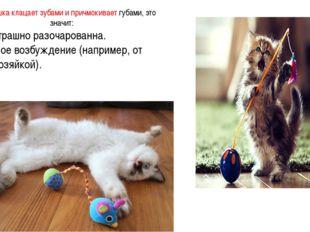 Когда кошка клацает зубами и причмокивает губами, это значит: 1. Она страшно