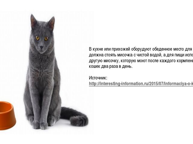 В кухне или прихожей оборудуют обеденное место для кошки. Там должна стоять м...