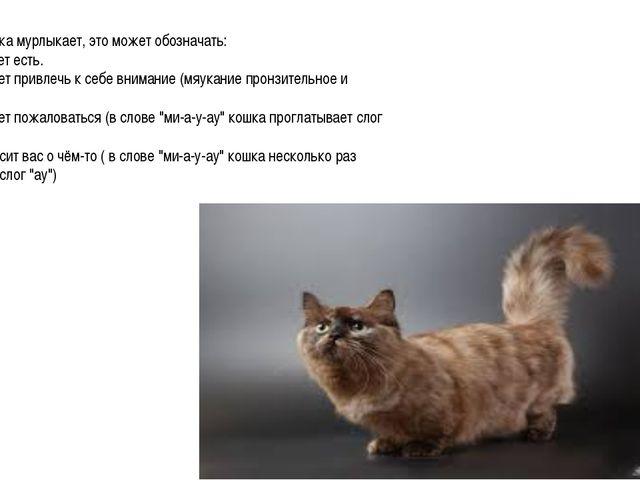 Когда кошка мурлыкает, это может обозначать: 1. Она хочет есть. 2. Она хочет...