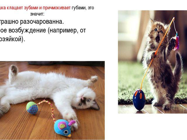 Когда кошка клацает зубами и причмокивает губами, это значит: 1. Она страшно...