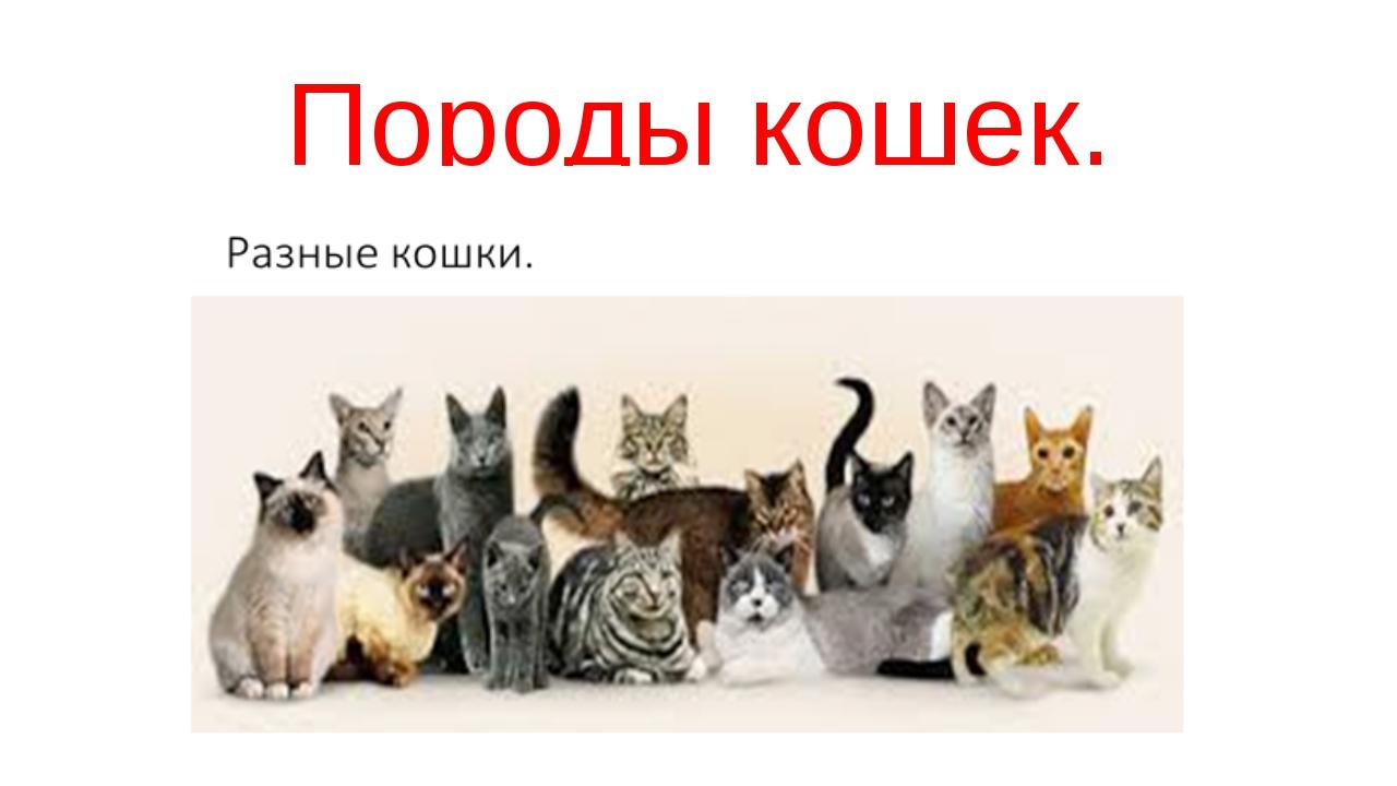 презентации скачать кошки