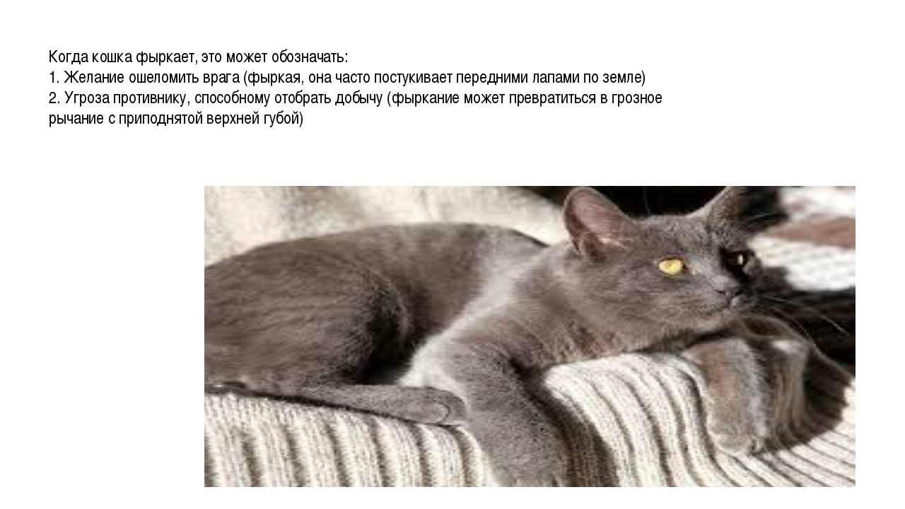 Когда кошка фыркает, это может обозначать: 1. Желание ошеломить врага (фыркая...