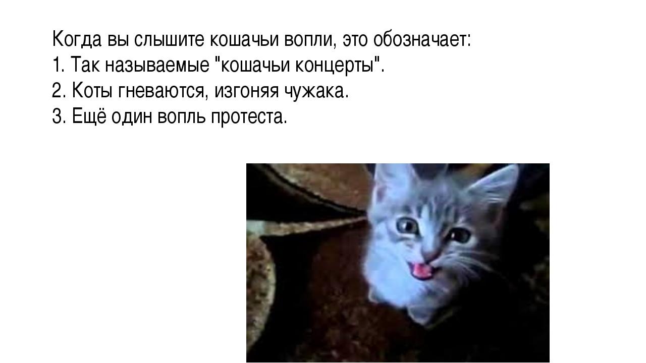 """Когда вы слышите кошачьи вопли, это обозначает: 1. Так называемые """"кошачьи ко..."""