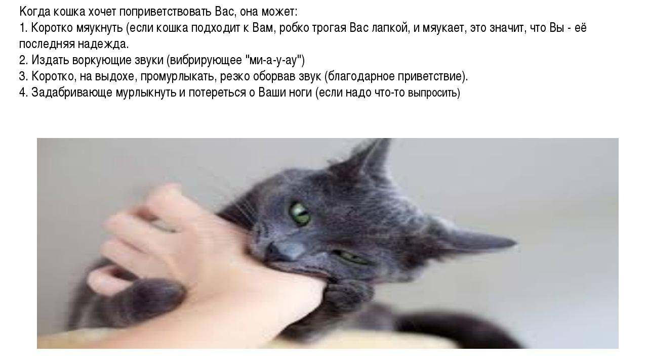 Kогда кошка хочет поприветствовать Вас, она может: 1. Коротко мяукнуть (если...