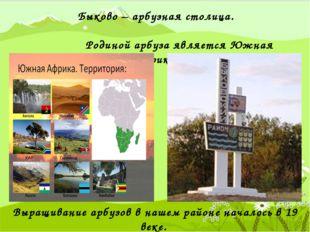 Быково – арбузная столица. Родиной арбуза является Южная Африка. Выращивание