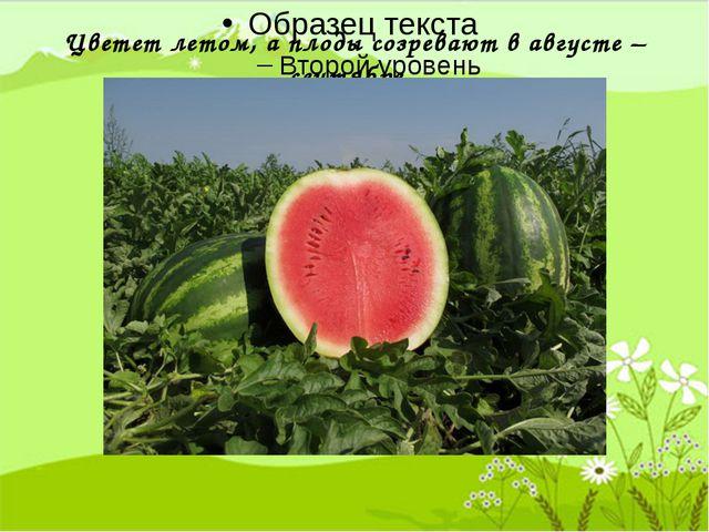 Цветет летом, а плоды созревают в августе – сентябре.
