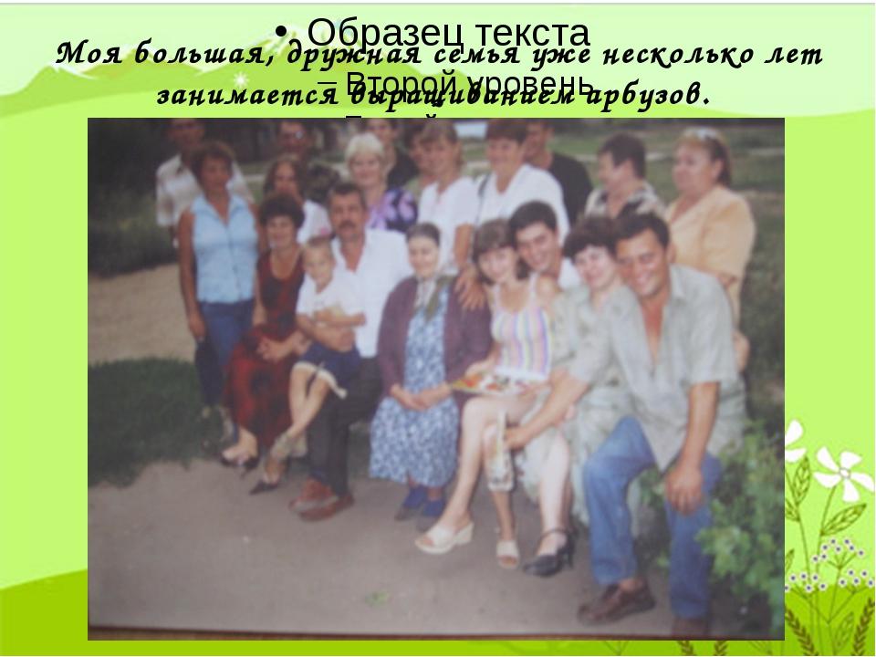 Моя большая, дружная семья уже несколько лет занимается выращиванием арбузов.