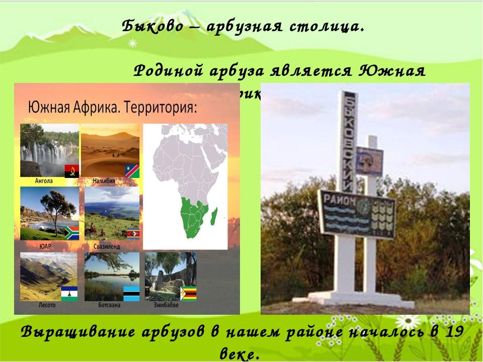 Быково – арбузная столица. Родиной арбуза является Южная Африка. Выращивание...