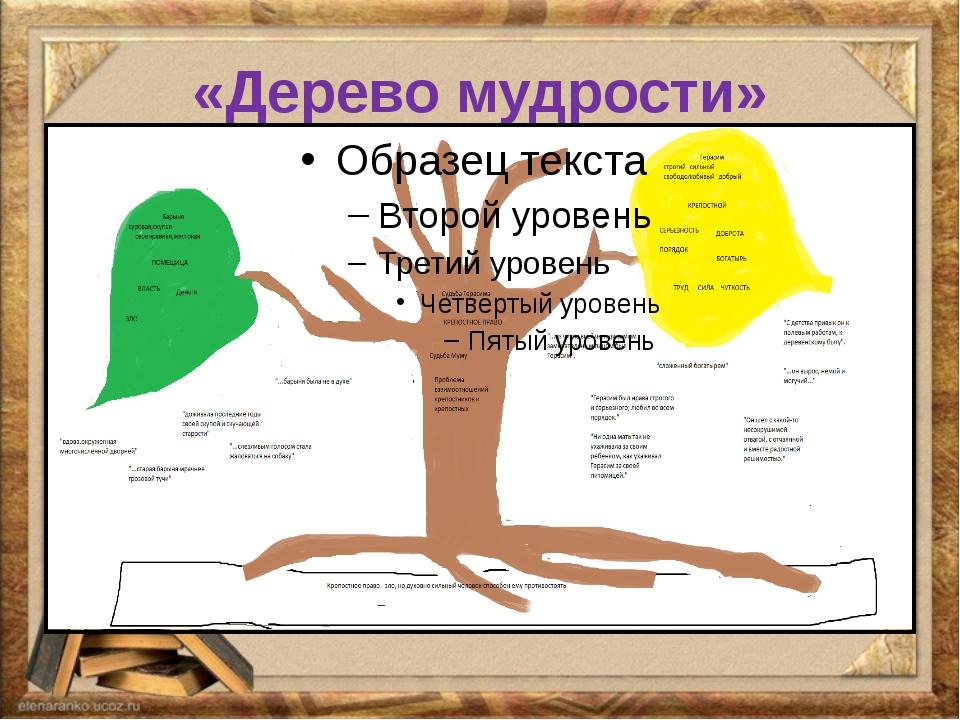 «Дерево мудрости»