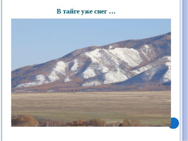 В тайге уже снег …