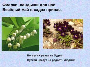 Но мы их рвать не будем. Пускай цветут на радость людям! Фиалки, ландыши для