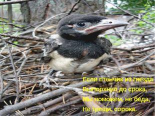 Если птенчик из гнезда Выпорхнул до срока, Мы поможем, не беда, Не трещи, сор