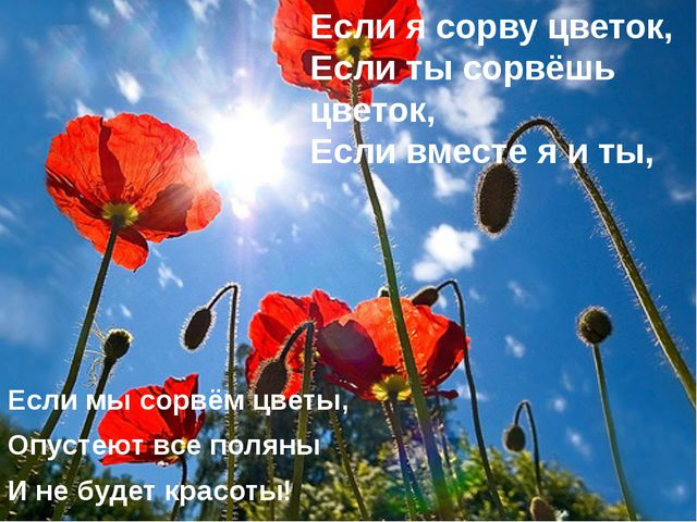 Если мы сорвём цветы, Опустеют все поляны И не будет красоты! Если я сорву цв...