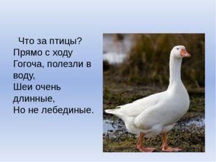 Что за птицы? Прямо с ходу Гогоча, полезли в воду, Шеи очень длинные, Но не