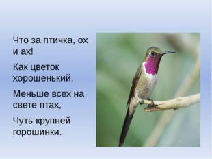 Что за птичка, ох и ах! Как цветок хорошенький, Меньше всех на свете птах, Ч