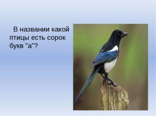 """В названии какой птицы есть сорок букв """"а""""?"""