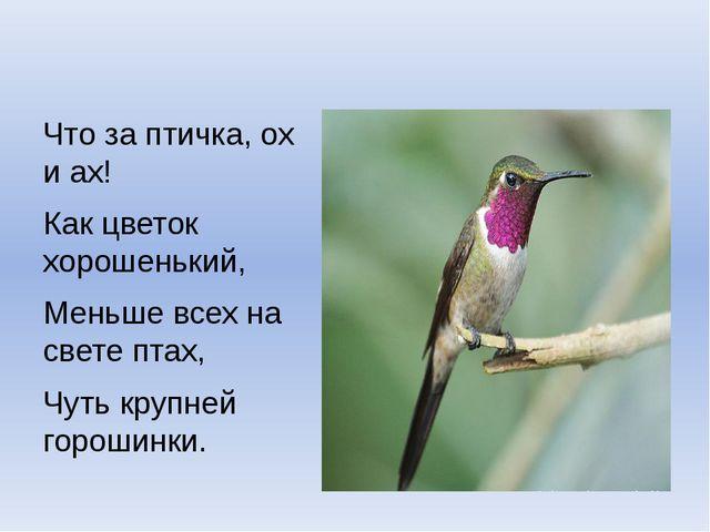 Что за птичка, ох и ах! Как цветок хорошенький, Меньше всех на свете птах, Ч...